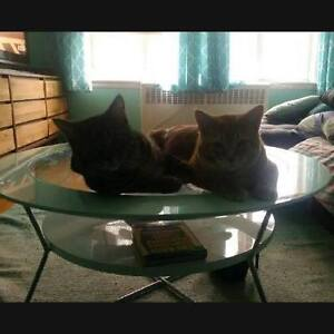 2 Male Cats Free to  Good Home