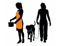 Available Part Time Cook / Dog Walker / General Assistance