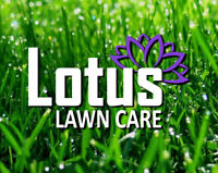 Weekly Grass Cutting - BOOK TODAY