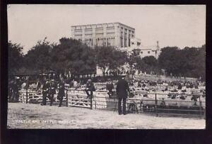 Norfolk-NORWICH-Castle-Cattle-market-RP-PPC-1915