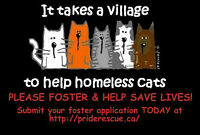 URGENT PLEA FOR FOSTER HOMES!
