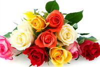 """STOP and """"Smell The Roses"""" #1 Cleaning Service $75/4hrs"""