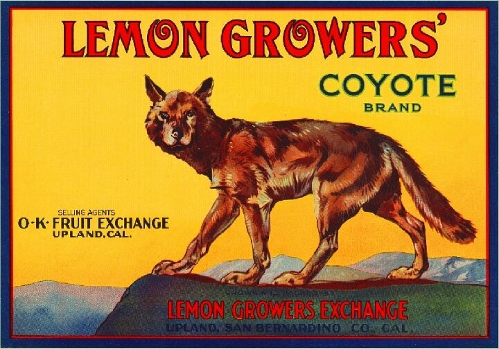 Upland San Bernardino California Coyote Lemon Citrus Fruit Crate Label Art Print