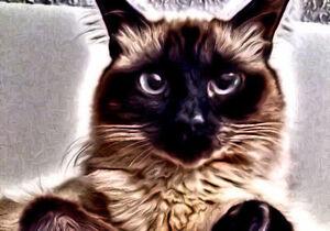 Graphic Design - Enhanced Pet Photos Kitchener / Waterloo Kitchener Area image 7