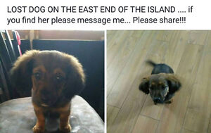 Lost dog on Cornwall Island since May 23