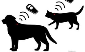 Cheap microchipping service ( limited time)