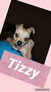 Meet Tizzy!
