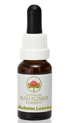 Autumn Leaves - Australian Bush Flower Essence Stock Bottle Remedy - 15mL