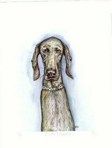Weimaraner Limited Edition Art Print UK Artist Elle Wilson A Little Disappointed
