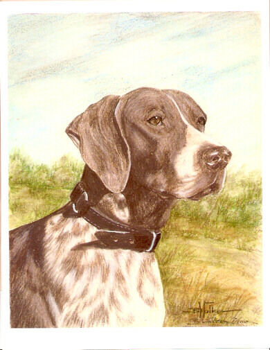German Shorthaired Pointer Limited Edition Art Print by US Artist Barbara Walker