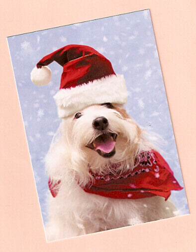 Bearded Collie Beardie Christmas Cards from Leaning Tree Box of 10 Made in USA*