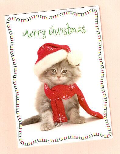 Cat Kitten Santa Hat Lights Christmas Cards - Box of 15