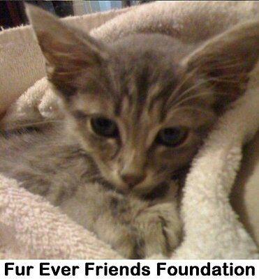 Fur Ever Friends Foundation