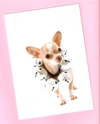 Chihuahua with Jingle Bells Christmas Cards Box of 10*