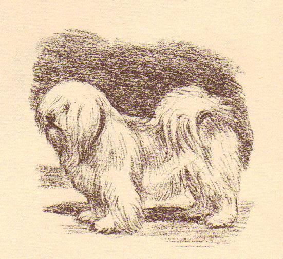 Lhasa Apso - Vintage Dog Print - 1954 Megargee