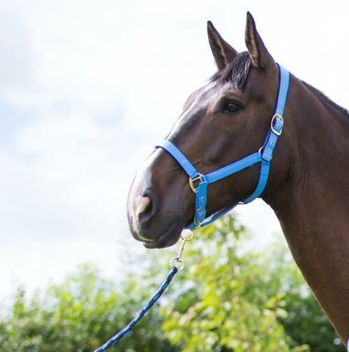 Cameo Fleece Lined Head Collar Full Horse