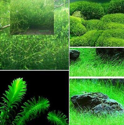 Teichpflanzen Set B grüne Pflanzen für den Teich immergrüne Unterwasserpflanzen
