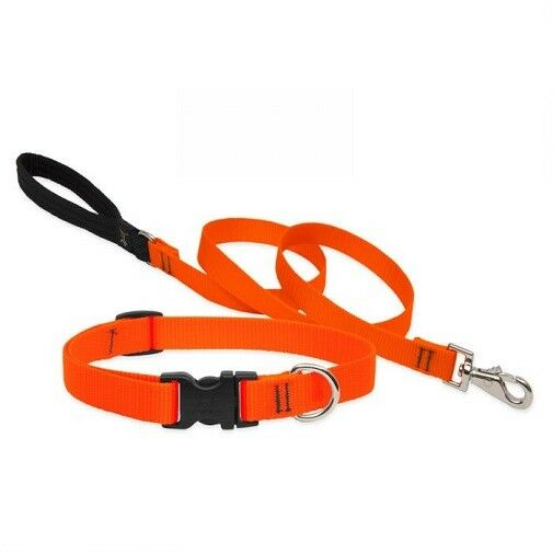 "NEW Blaze Orange Dog Collar or Leash in 3/4"" or 1"" by Lupi"
