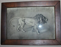 RARE ANTIQUE CHARCOALProwling Lion Painting Drawing ANTIQUE