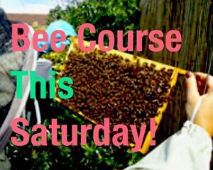 21st! Honey Bee workshop sat 21st Jan - bee quick;) Mona Vale Pittwater Area Preview