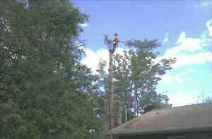 Fully Insured Tree Removal Kingston Kingston Area image 4