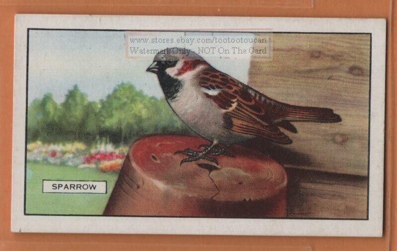 Sparrow Bird 1930s Ad Trade Card