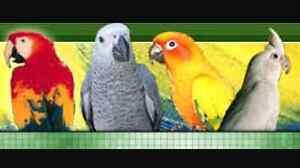 Bird sitter/carer Kalgoorlie Kalgoorlie Area Preview