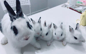 Baby bunnies for preorder ready to go on July 27th
