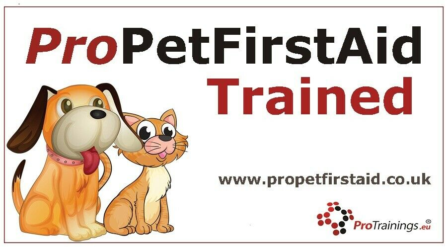 Pet Sitter and Dog Walker ~ Fit and Fun Pet Care ~ pet sitting / dog  walking / cat care services | in Laurencekirk, Aberdeenshire | Gumtree