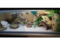 BEARDED DRAGON VIV & ACCESSORIES