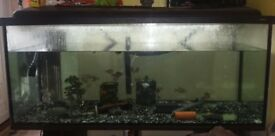 4ft aquarium with stand external filter digital heater bought new 1 year ago
