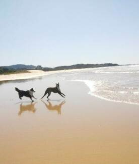 Dog Walking and Sitting Coffs Harbour 2450 Coffs Harbour City Preview