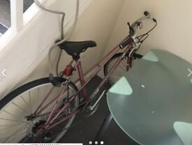 Trendy Adult's bicycle for sale