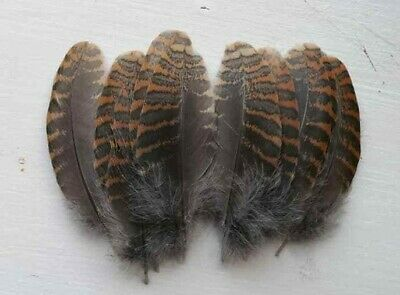Native crafts Woodcock barred breast feathers art Fly tying