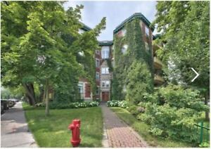 Newly renovated 5-1/2 w/ character in Outremont/Mile End 4 Rent