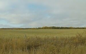 (Discount) 720 acres of farm land (RM Insinger) for rent (lease)