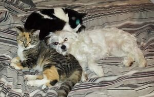 DOGGY, KITTY and EXOTICS Pet Sitting
