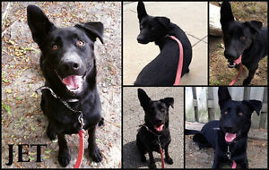 I'M JET, I'M FUN, LOVING AND I NEED A FOSTER/FOREVER HOME