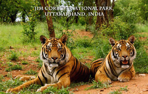 RETIRE IN INDIA: Trip to Corbett National Park
