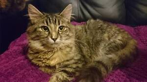 Rogue would love a forever home of her own Shalvey Blacktown Area Preview