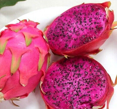 FD852 Red Dragon Fruit Seeds Hylocereus Pitaya ...