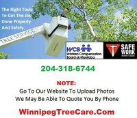 ★ ★ ★ Need Tree Removal / Pruning Service ---> 204.318.6744