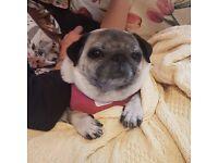Seeking dog daycare in Ely
