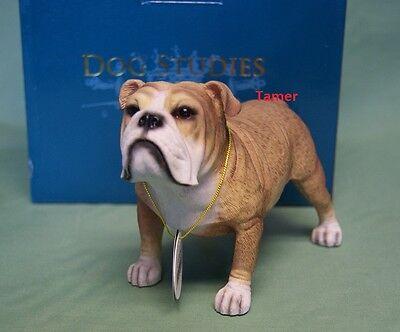 Fawn & White English Bulldog Dog Ornament Figure British Bull Dog Model New