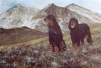 GORDON SETTER GUN DOG FINE ART LIMITED EDITION PRINT