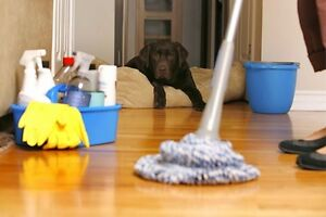 WHY YOU SHOULD HAVE ME CLEAN YOUR HOME?? Edmonton Edmonton Area image 1
