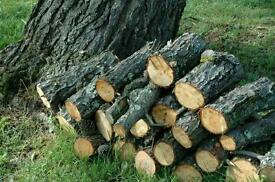 WANTED: logs / trees