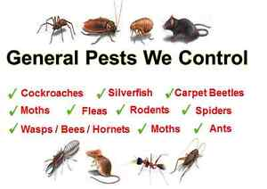 !!!!!!PEST CONTROL!!!!!!!!!!!!!! WE ARE THE BEST IN THE BUSINESS! Ryde Ryde Area Preview