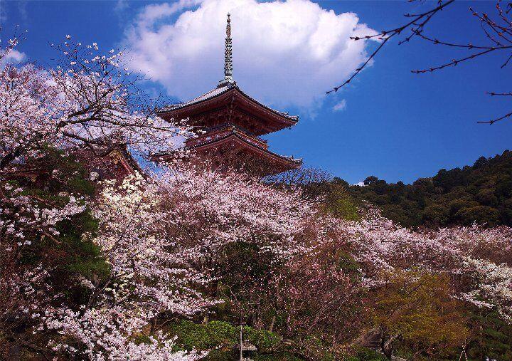 kyotojapantrendshop