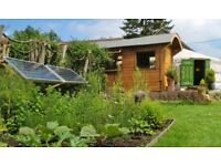 Land with trees wanted to build a small off grid cabin on!